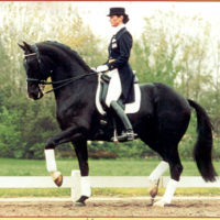 Improving the Equestrian: Article 1